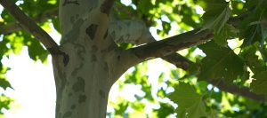 kansas city mo tree removal company