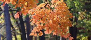 kansas city tree trimming