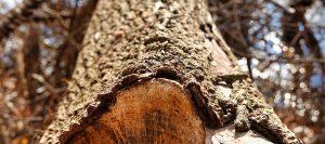 leawood ks tree removal company
