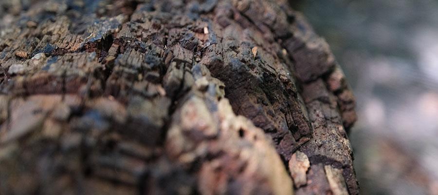 overland park ks tree removal company