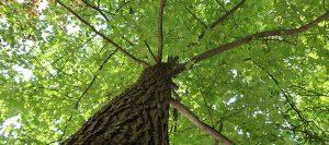 overland park ks tree removal dangers