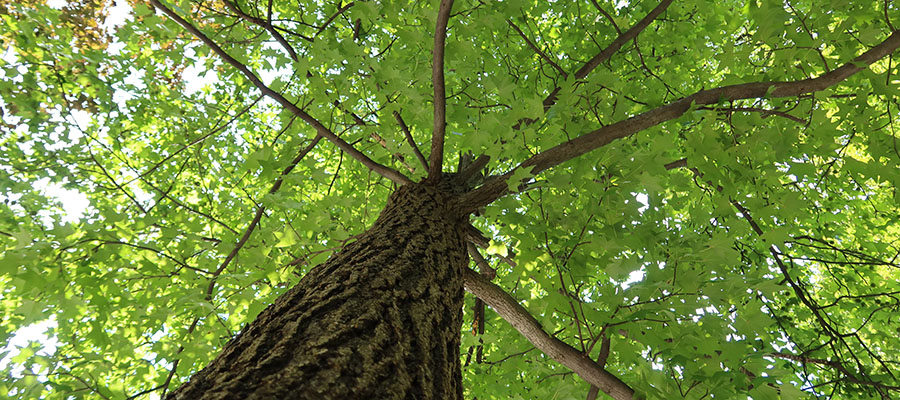 overland park ks tree removal dangers