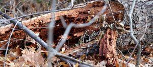 Leawood KS Tree Removal Company 2