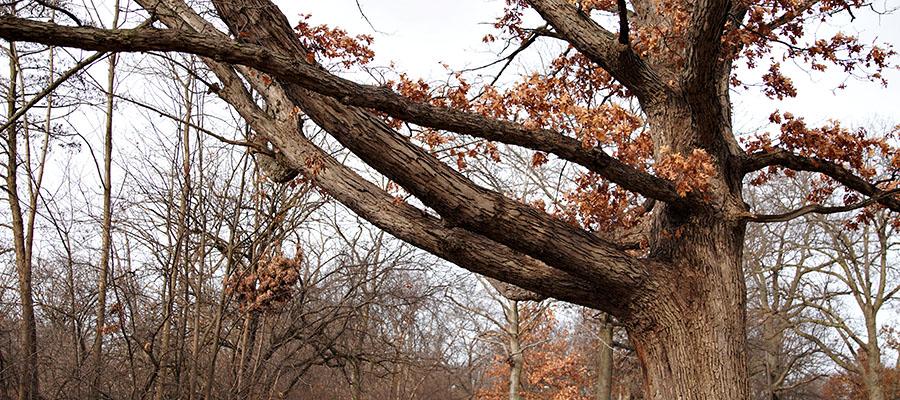 tree trimming company in kansas city mo